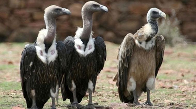 vultures-l